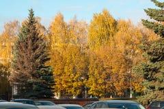 秋天树在城市在一个清楚的晴天 免版税库存照片