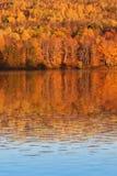 秋天树在新不伦瑞克加拿大 免版税库存照片