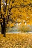秋天树在有五颜六色的叶子的公园 库存照片