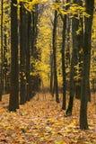 秋天树在有五颜六色的秋天的公园离开 库存图片