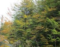 秋天树在森林里 免版税库存图片