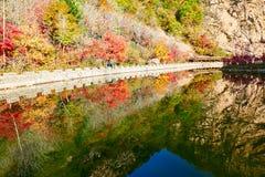 秋天树在水中倒置了反射 库存图片