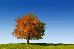 秋天树在特兰西瓦尼亚 库存图片