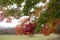 秋天树在田纳西 免版税图库摄影