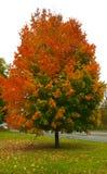 秋天树在皮茨福德, NY 库存图片