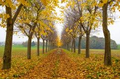 秋天树在私人住宅路标示用叶子在意大利 库存照片