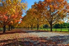 秋天树在缅因 免版税库存照片