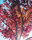 秋天树在自然保护区的芝加哥 图库摄影