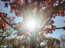 秋天树在芝加哥 免版税库存图片