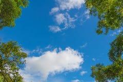 秋天树在从地面看见的森林里  库存照片