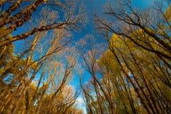 秋天树在晴天 免版税库存照片