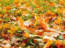 秋天树彩色照相在地面的 图库摄影