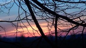 秋天树枝和日出天空背景 股票视频
