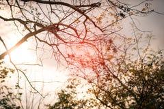 秋天树枝背景 减速火箭的颜色样式 图库摄影
