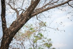 秋天树枝背景 库存照片
