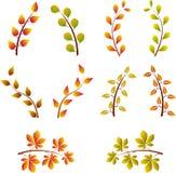 秋天树枝,树枝传染媒介 库存照片