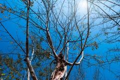 秋天树枝 库存照片