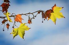 秋天树枝 库存图片