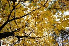 秋天树样式 看法从底部到上面 图库摄影