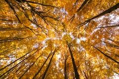 秋天树样式 库存照片