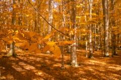 秋天树样式 免版税库存图片