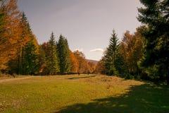 秋天树样式 免版税图库摄影