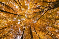 秋天树样式 图库摄影