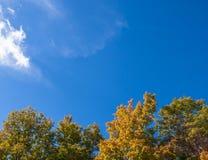 秋天树梢在天空下 库存照片