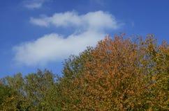 秋天树梢 库存照片