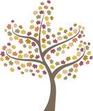 秋天树槭树 免版税库存照片