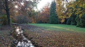 秋天树河 库存照片