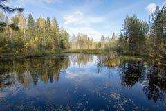 秋天树的反射 库存图片