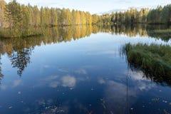 秋天树的反射 免版税库存照片