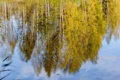 秋天树的反射 免版税库存图片