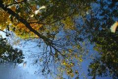 秋天树的反射 免版税图库摄影