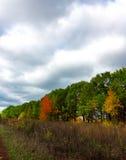 秋天树的明亮的颜色 秋天 库存照片