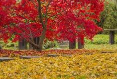 秋天树的明亮的颜色 库存照片