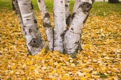 秋天树的明亮的颜色 库存图片