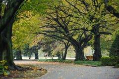 秋天树的本质风景在shinjuku公园东京日本 免版税图库摄影