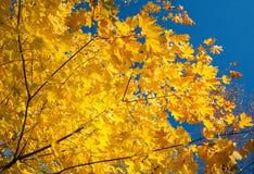 秋天树的片段 免版税库存照片