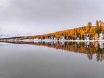 秋天树的美好的反射在寂静的水中 免版税库存图片