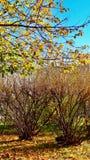 秋天树的颜色 库存图片