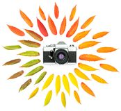 秋天树离开葡萄酒照片照相机被隔绝的白色backgroun 库存照片