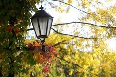 秋天树秀丽  免版税库存图片
