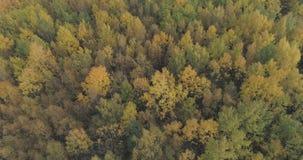 秋天树空中射击在森林里在10月 免版税库存照片