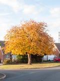 秋天树角落高黄色金黄叶子落 库存照片