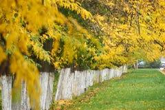 秋天树连续安排了,绿草和黄色叶子 库存图片