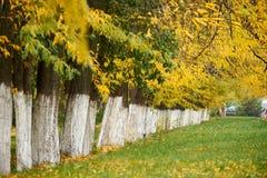 秋天树连续安排了,绿草和黄色叶子 免版税库存照片