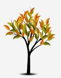 秋天树,例证 免版税库存照片