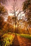 秋天树,内布拉斯加 库存照片